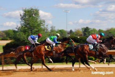 Most Famous Racehorse