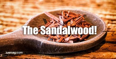 The magic of Sandalwood Essential Oil
