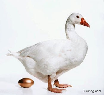 Killing the golden goose Golden Goose Eggs