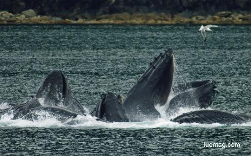 Water Giants Of Australia
